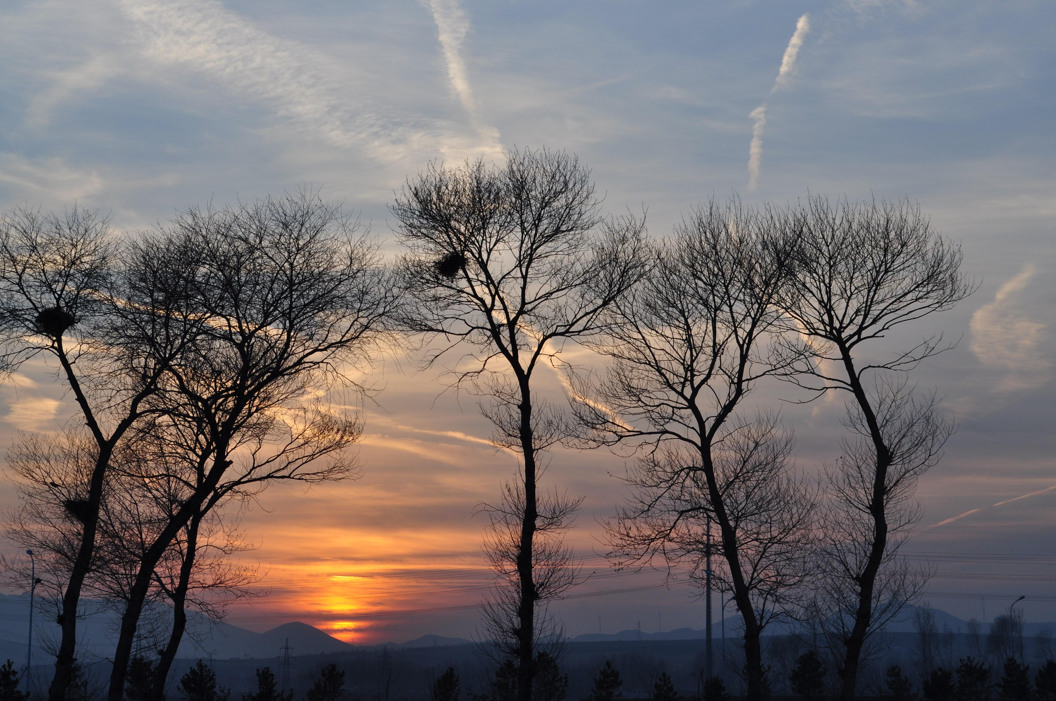 这几棵老树似乎对夕阳恋恋不舍