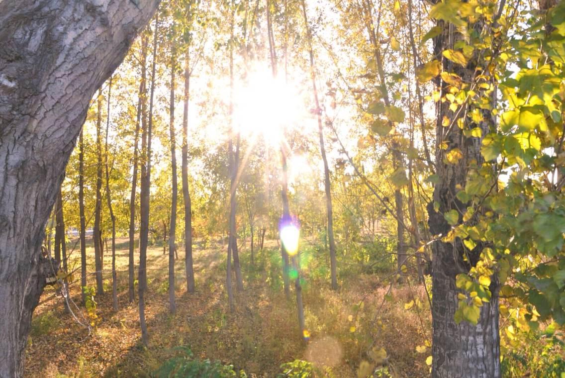 壁纸 风景 森林 桌面 1136_760